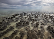 Stromatolites - Shark bay